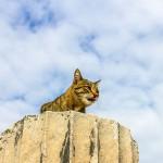 貓究竟可以有多長壽?