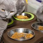 開飯喇!嚴選貓餐具保健康