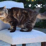【貓界耆英】長命貓再破世界紀錄