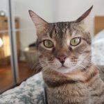 星洲機場失蹤,21月後人貓重逢