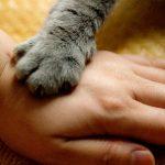 貓會記得我們嗎?