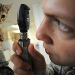 看獸醫如臨大敵,主人與貓有壓力→減壓實用TIPS