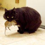 治鼠變虐貓,瘟疫來襲時,可有想起貓?