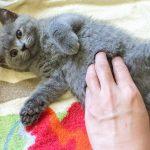 快樂的搔癢,搔癢的快樂,來給我們的貓兒愉快的「唧唧」!