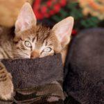 貓總要跟你在一起!養貓人最有耐性、最不吝嗇
