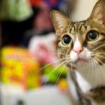 【美好時光】我們常懷念的愛貓:Kiwi,美麗舊照分享