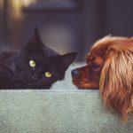 提升動物福利 推「謹慎責任」
