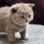 Kitten 2020