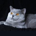 香港養貓住戶逾10萬