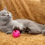 貓之魔咒:三大致命病毒難分難解
