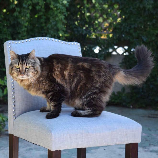 corduroy-cat