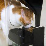 監控貓咪飲食的重要