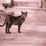 貓咪迷蹤:5大個性分析