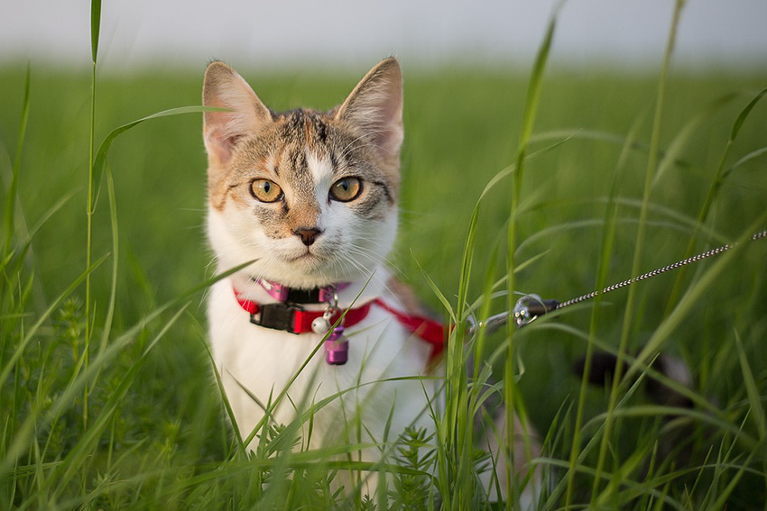 young-cat-1373902_1280