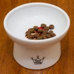 理想優質貓生活:食好啲!特製食物碗有否幫助?
