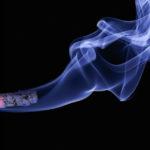 【忠告】吸煙危害寵物健康,貓患惡性腫瘤機會倍增
