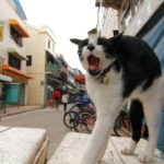 貓治鼠無功而還,全因香港人的壞習慣