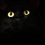 黑貓具不凡的魅力