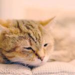 【養貓新手12】貓的體溫