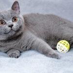 貓會玩Fetch嗎?