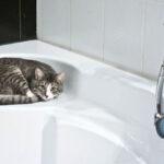 【養貓新手26】貓要洗澡嗎?